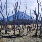 Camping Santai Ceria di Gunung Papandayan