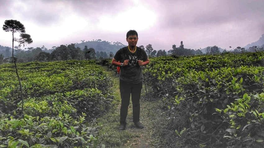 kebun teh kemuning