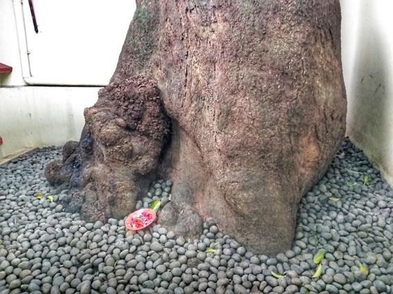 pohon vihara dhanagun